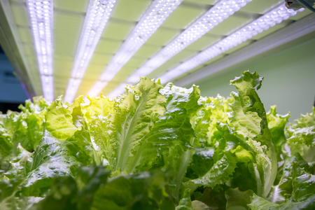Organic hydroponic vegetable garden Banque d'images