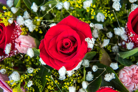 red rose background ,natural texture Stock Photo