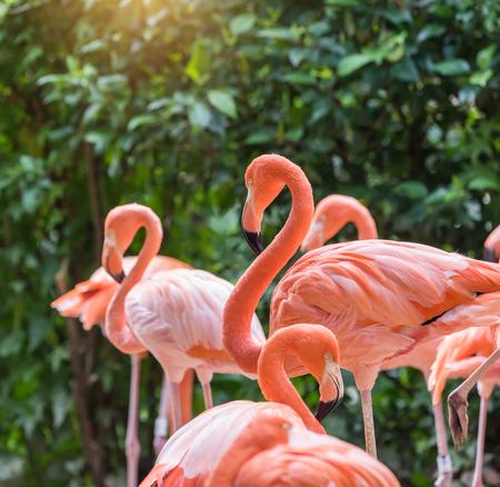 Flamingo birds standing in lake Stock Photo