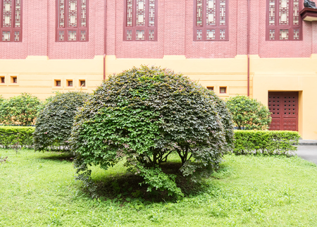 green coniferous shrubs shorn by round shape Editöryel