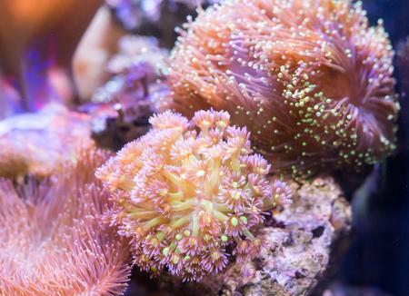 sharm: Coral Reef in Sunlightmarine aquarium.