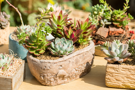 cactus succulents in a planter Stock Photo