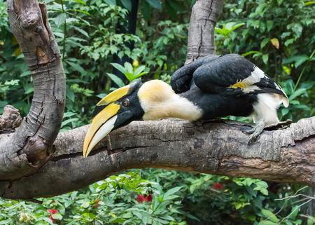 Great hornbill in rainforest Stock fotó - 85640764