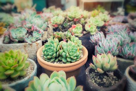 Miniature succulent plants in garden