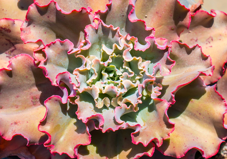 succulent plants arranged on the ground
