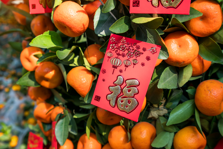 Spring festival Chinese New Year Red envelope decoration on orange tree