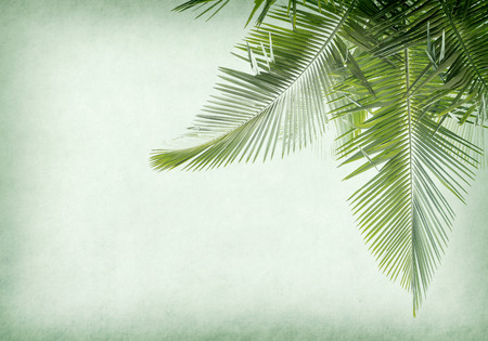old paper background with palm leaf Stock Photo