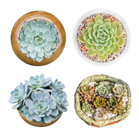 collection of miniature succulent top isolated on white background