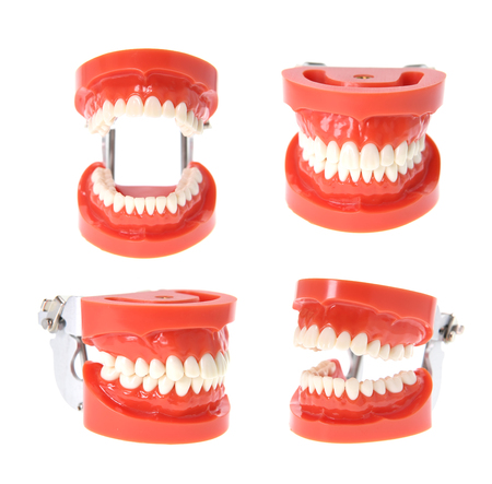 Teeth or dentures isolated on white.