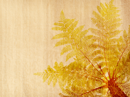 Cyathea on antique cracked paper texture
