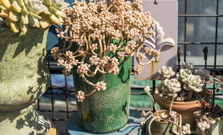 Miniature succulent plants Stockfoto