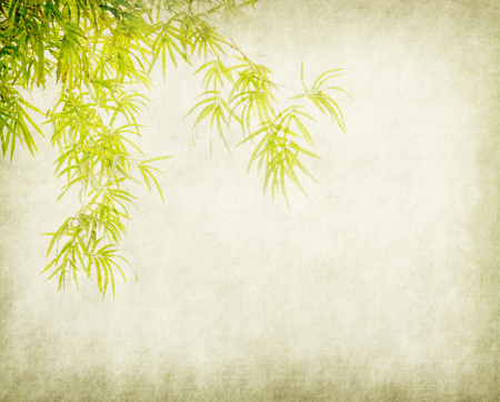bambus na starym tle tekstury papieru grunge