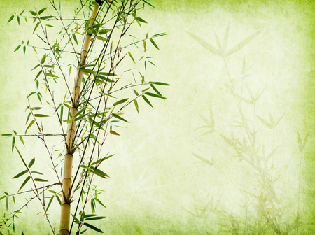 Bambus auf altem Schmutzpapier-Texturhintergrund Standard-Bild