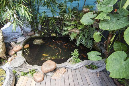 koi fishes in the pond Banco de Imagens