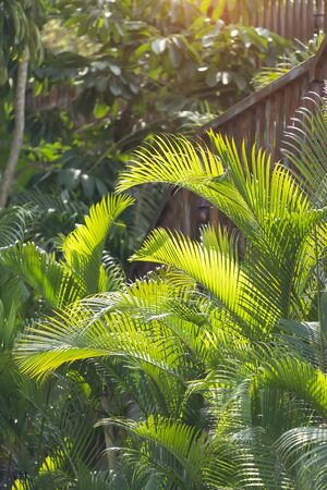 green palm leaf in sunlight Banque d'images
