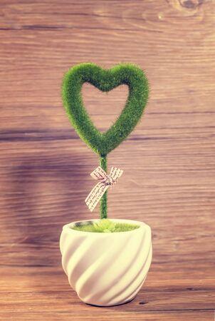 Heart shaped plant in a pot Reklamní fotografie