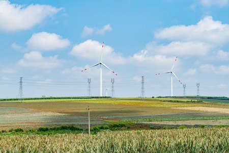 Windmills on the field generating electricity