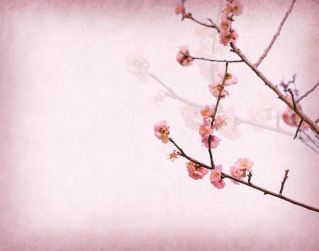 plum blossom blossom on Old antique vintage paper background 免版税图像