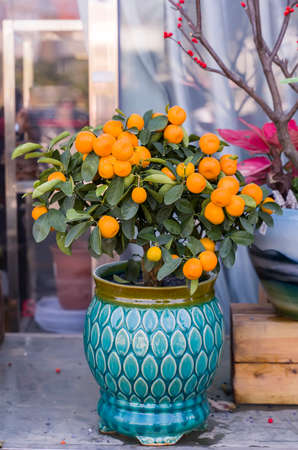 Tangerines, a symbol of good luck at Chinese New Year