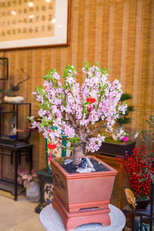 Tradition lantern of Chinese mean best wishes and good luck for the coming new year,hanging on peach flower 免版税图像