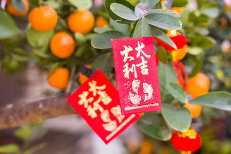 Lucky knot hanging on Tangerines for Chinese new year greeting,Chinese character means good bless for new year 免版税图像