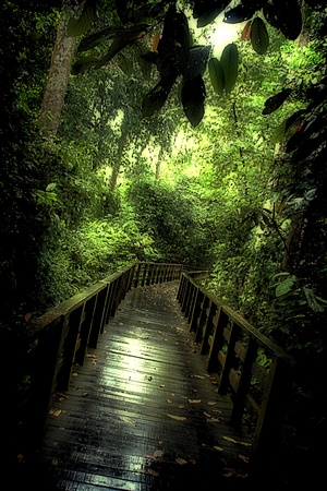 sandakan: Jungle Walkway Sepilok Sandakan Stock Photo