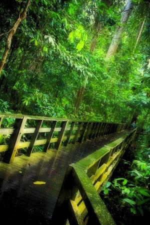 sandakan: Jungle Walkway Sepilok, Sandakan Stock Photo