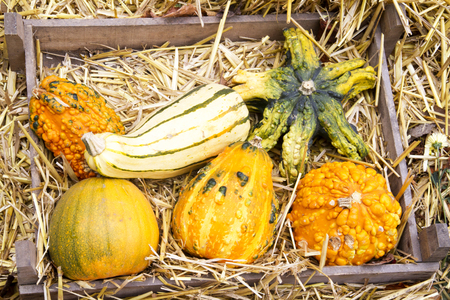 colored pumpkins in a wooden box with straw