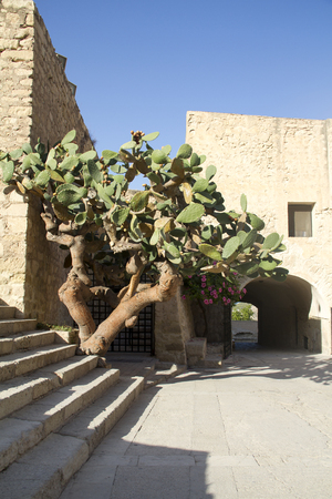 Prickly pear cactus plant in a castle
