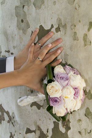 Hands with wedding rings gold Archivio Fotografico - 118444313