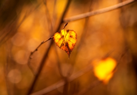 haiku: photo of dry leaf in the light of the sunset Stock Photo