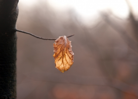 dry leaf on a branch photo