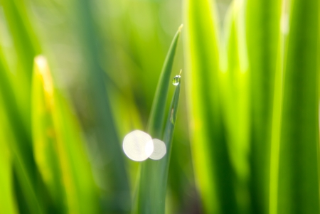 dewdrop: dewdrop on green grass