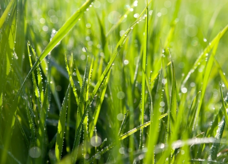 dewdrops: dewdrops on green grass Stock Photo