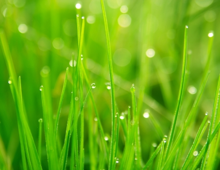 dewdrops: dewdrops on green grass in sunlight