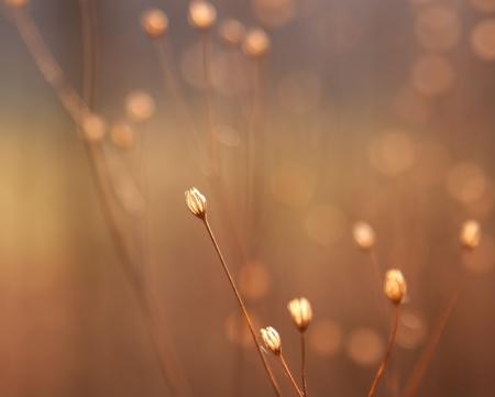 haiku: dried flower buds of weed in sunshine