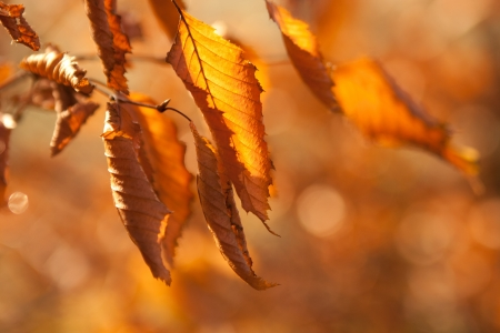 wilting:  dry leaves in the sunlight Stock Photo