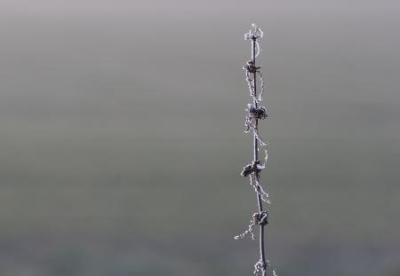 haiku: dry nettle in winter