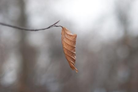 haiku: dry leaf on a branch