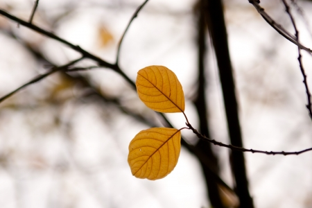 haiku: two autumn leaf in the forest Stock Photo