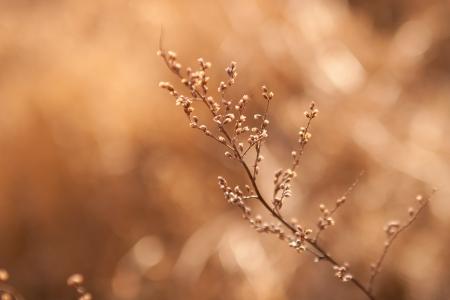 haiku: weed in sunlight Stock Photo