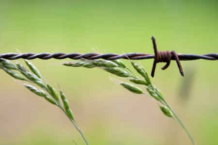 conceptions: Barbed wire and the green grass  Stock Photo