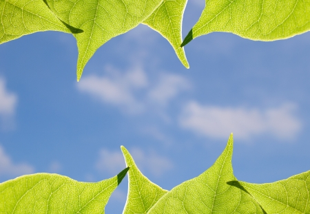 Green Leaves against the sky photo