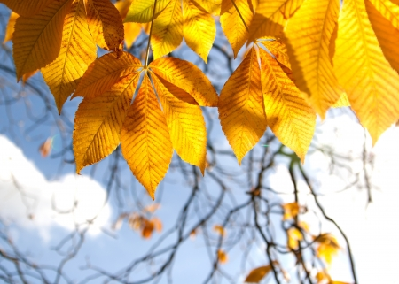 Autumn chestnut leaves in sunlight Stock Photo - 21223154