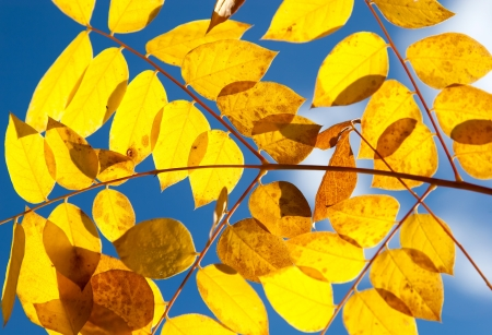 Autumn yellow leaves against the sky Stock Photo - 21223169