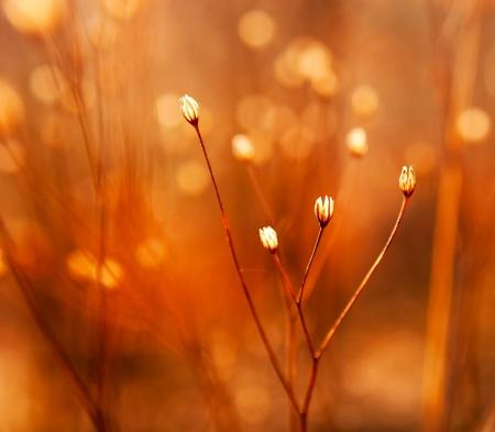 Les bourgeons de mauvaises herbes dans le soleil Banque d'images