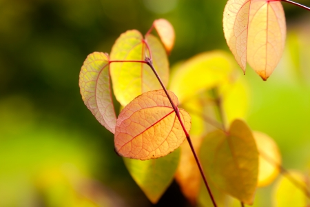 withering: Colorful autumn leaves in the forest