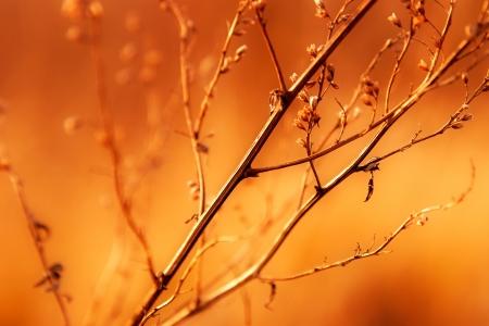 haiku: Dried weed in the sunshine
