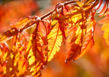 withering: Multicolored autumn leaves in sunshine