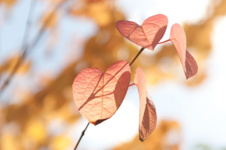 withering: Red autumn leaves in the sunshine Stock Photo